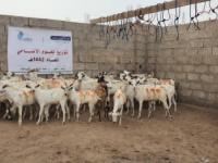 مؤسسة يماني للتنمية توزع لحوم الأضاحي لـ2578 أسرة في عدد من المحافظات