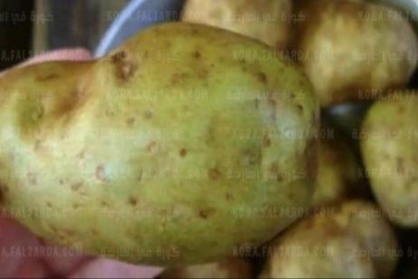 أكلة بطاطس تسببت في وفاة أسرة بأكملها بسبب طهي البطاطس بطريقة خاطئة