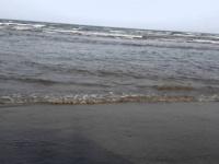 صيادون يبعيون الأسماك في أسواق سوداء على ساحل أبين